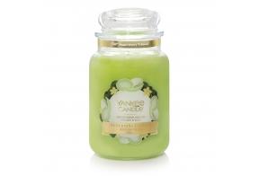 Honeydew Melon Classic - Large